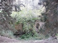 JNF planted trees obscure a flour mill that is among the very few standing remains of the once thriving the viilage of al -Lajjun